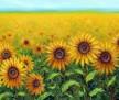 Sunshine Field 24x48